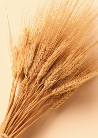 It is called celiac disease, and an estimated one percent of people in the